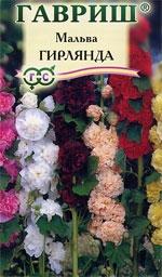 Фото цветка мальва гирлянда